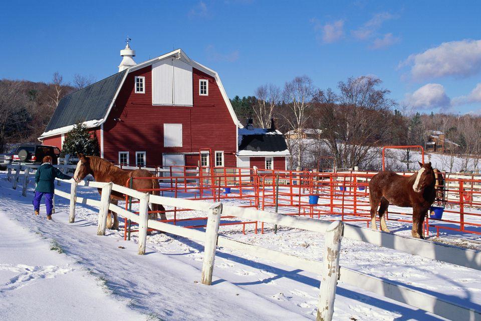 equitacion online